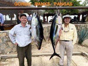 Gordo Banks tuna
