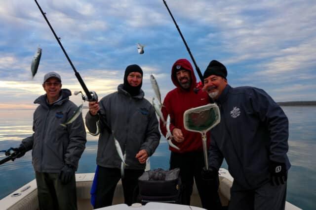 Baja mini mackerel