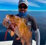 Rosarito bottomfish