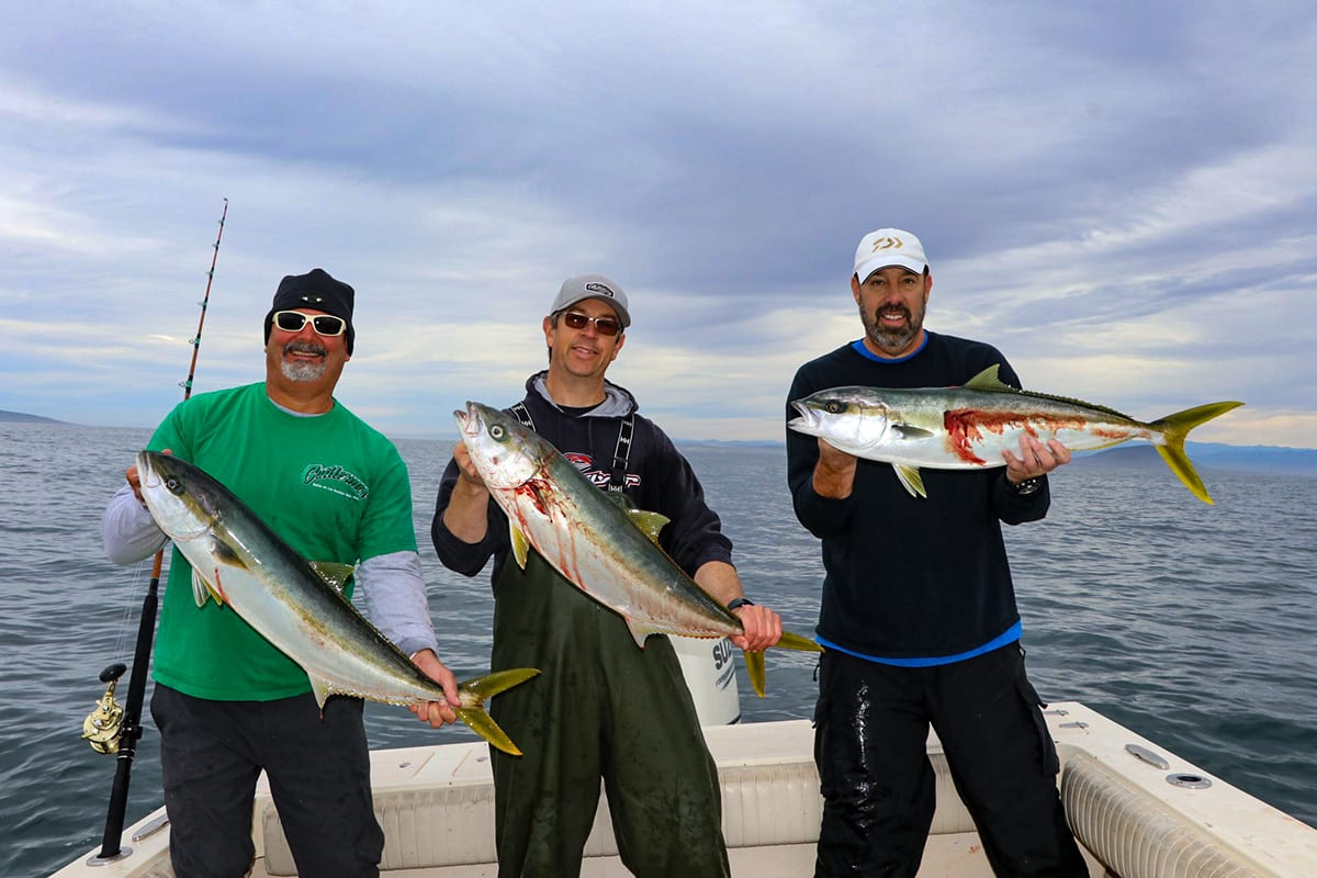 baja yellowtail bonanza
