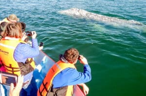 gray whale photo op