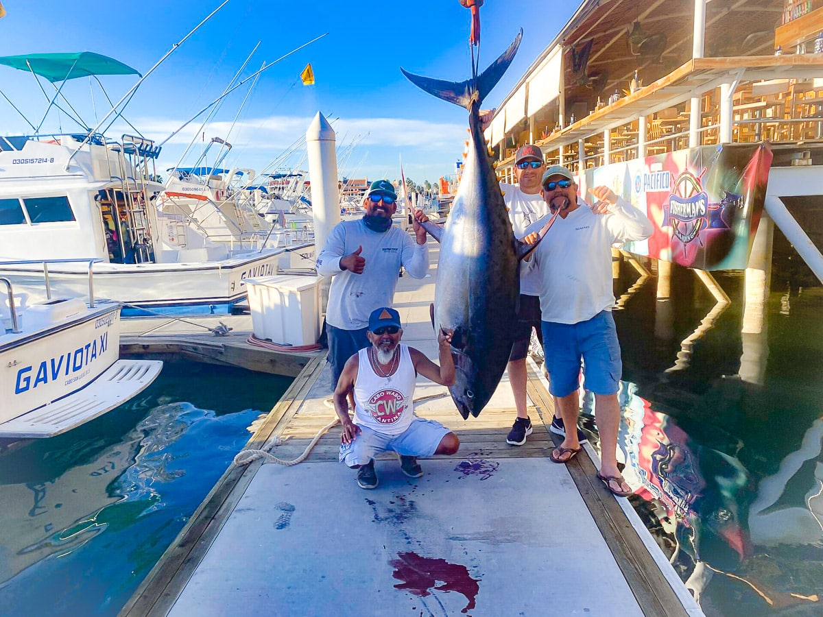 Baja cow sized yellowfin
