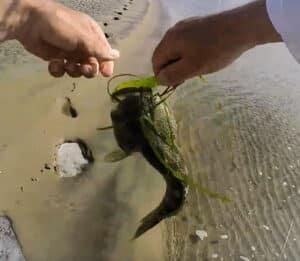 Baja Beach release