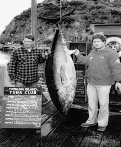 Guadalupe bluefin