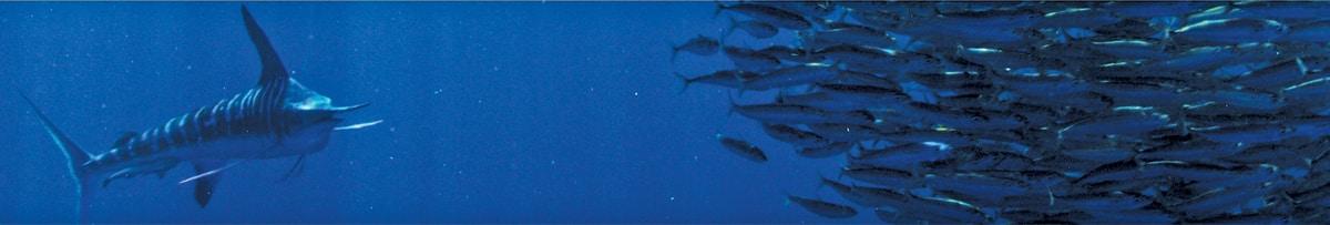 Gamakatsu offshore hooks