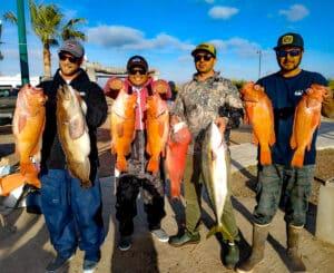 Baja fishing limit