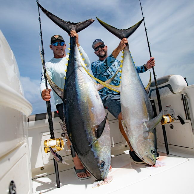 cow yellowfin tuna