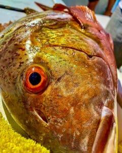 orange eyed grouper