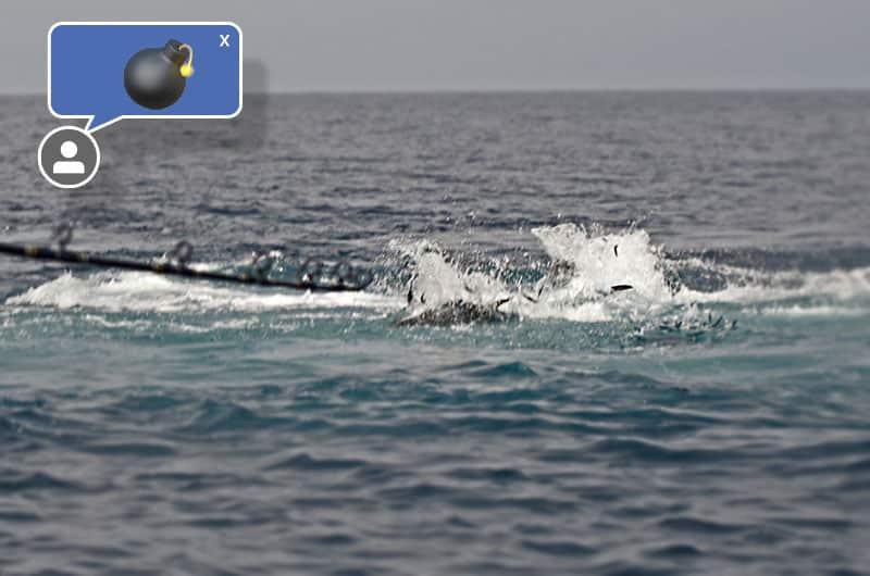 bluefin lures