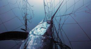 fish conservation IGFA