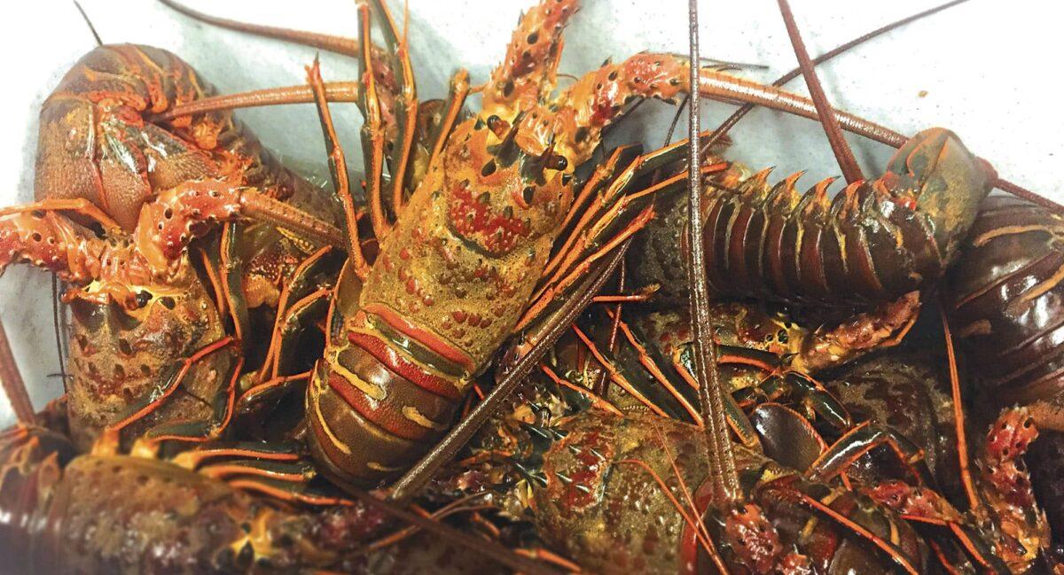 lobster hoop net