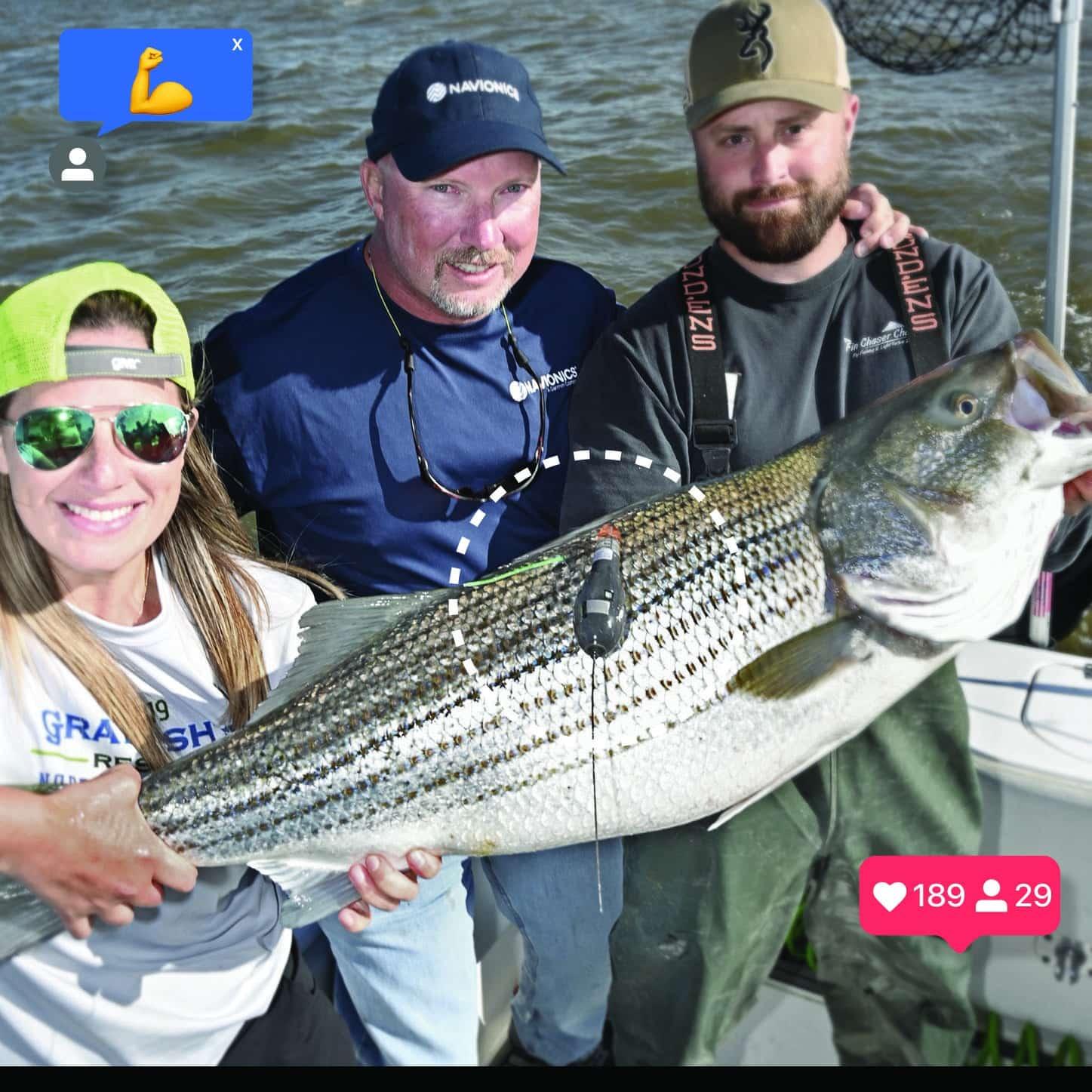 satellite tagging striped bass