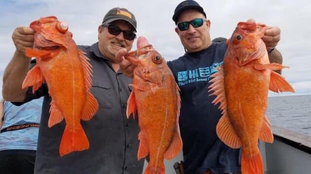 rockfish reports