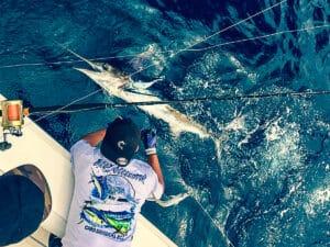 Los Cabos striper release
