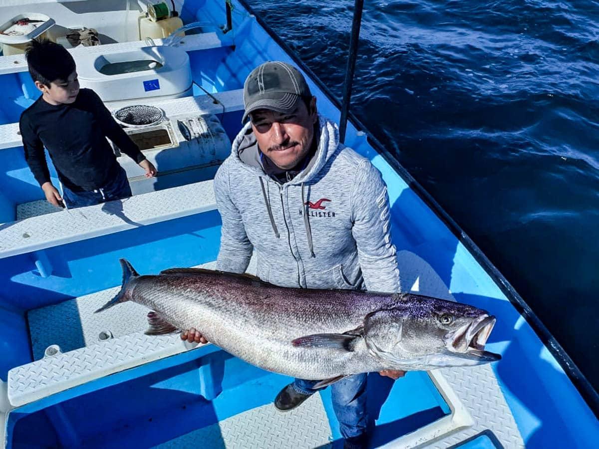 Mag Bay sea bass