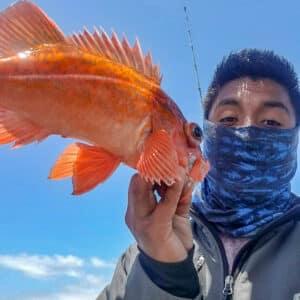 San Quintin red rock cod