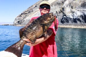 BOLA grouper