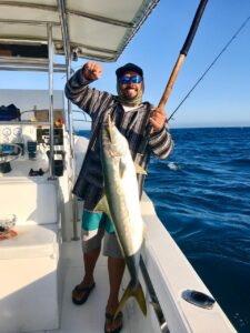 springtime yellowtail