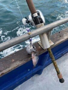 halibut rigs