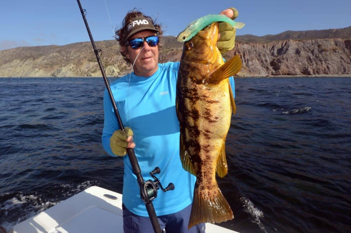 calico bass reports