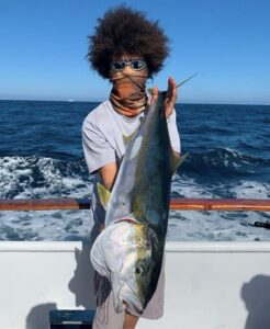 yellowtail report