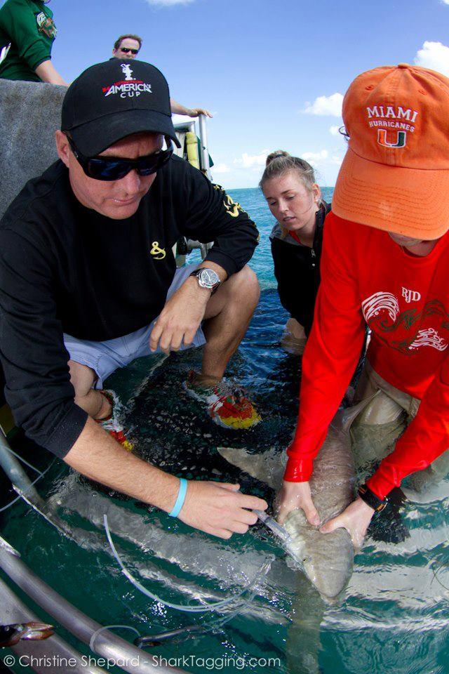 UM shark research