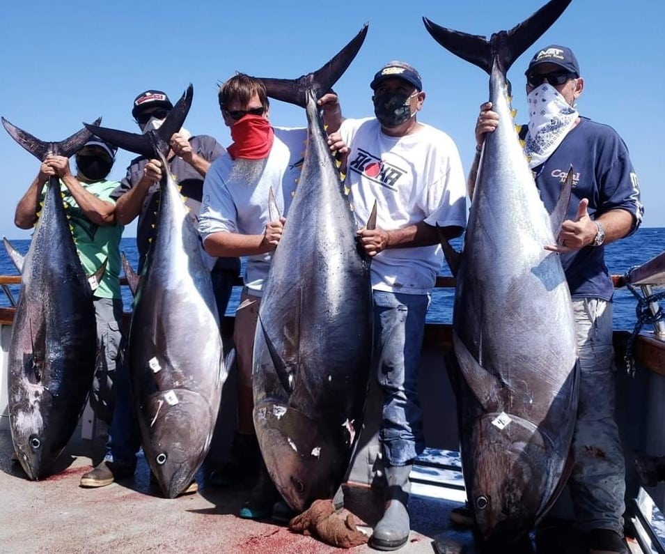 bluefin tuna reports