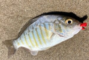 sand perch