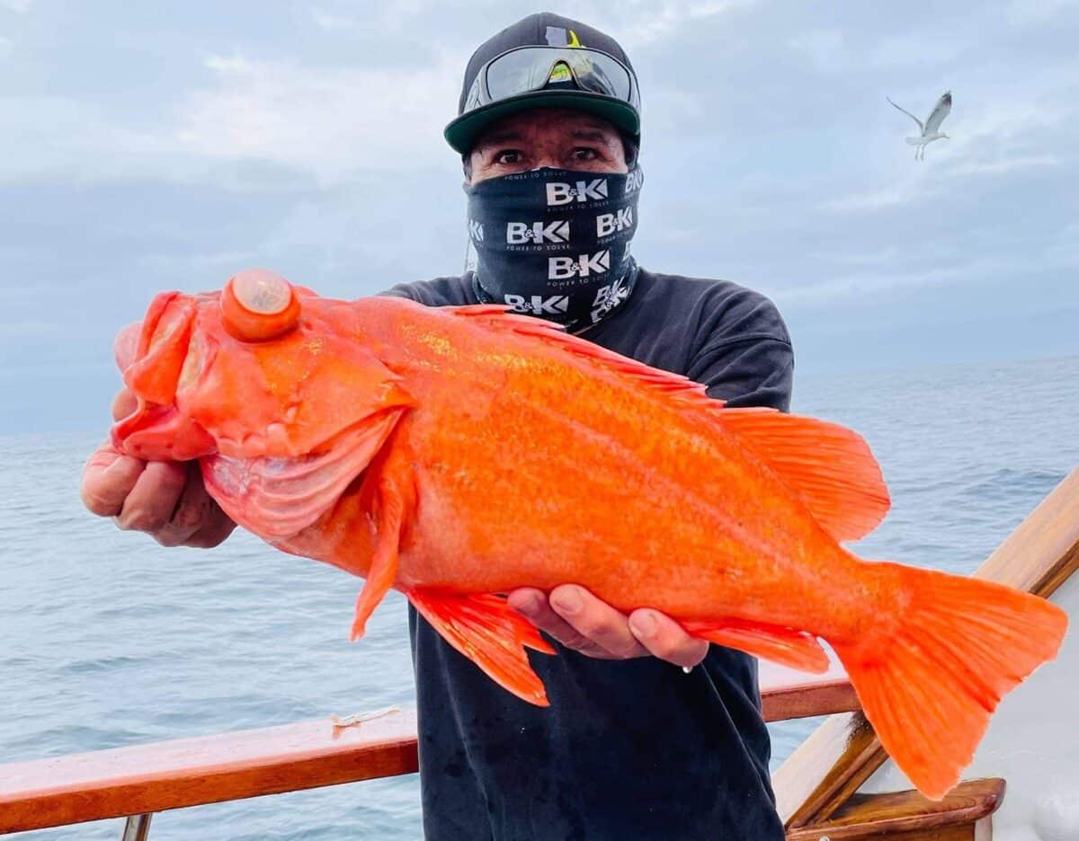 nice rockfish for socal angler
