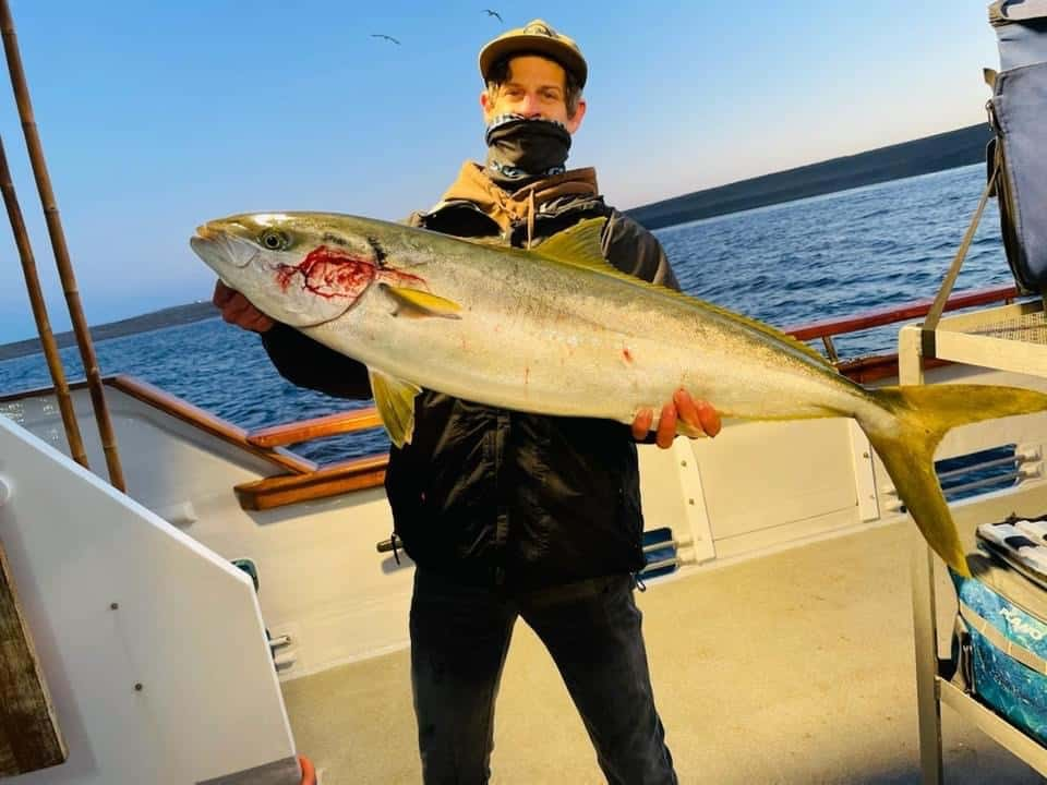 yellowtail report for SoCal