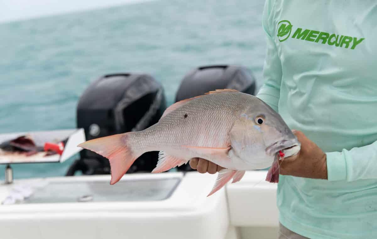 mutton snapper fishing in the keys