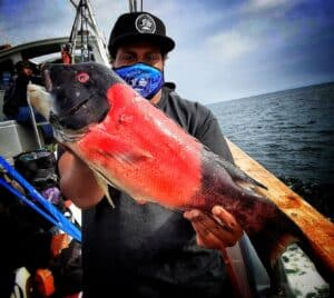 rockfish opener reports