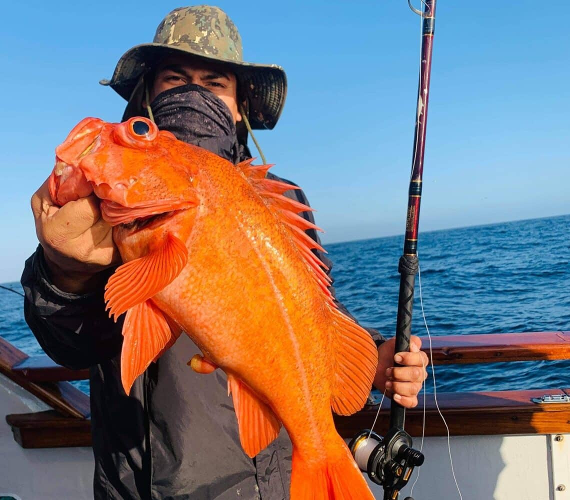 rockfish reports for SoCal