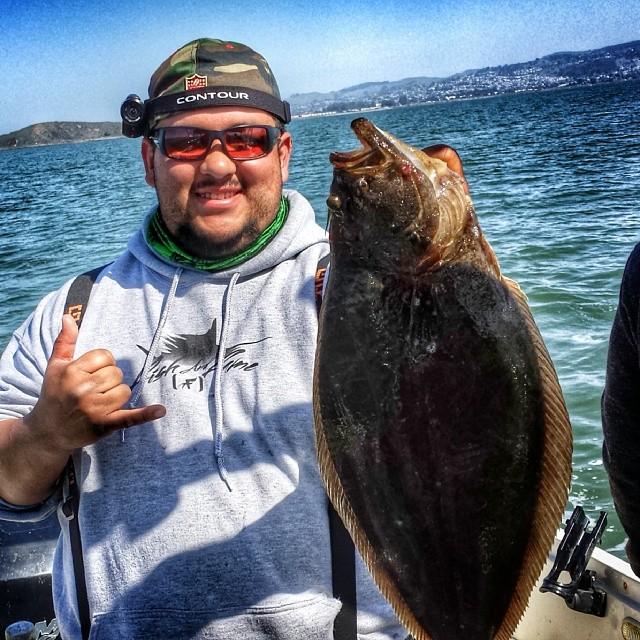 California halibut