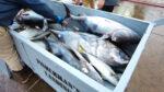 fishing reports