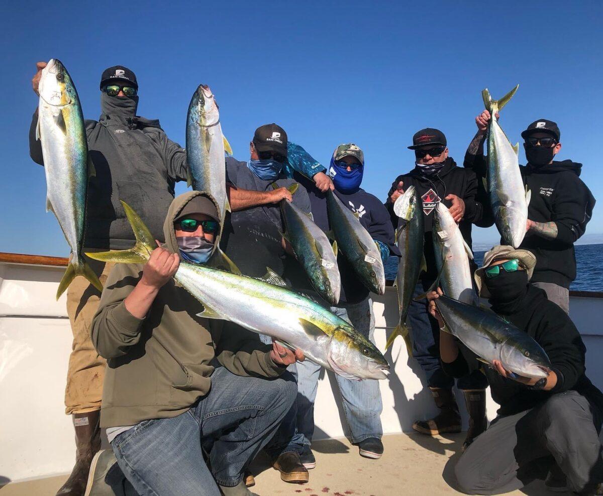 yellowtail fishing report