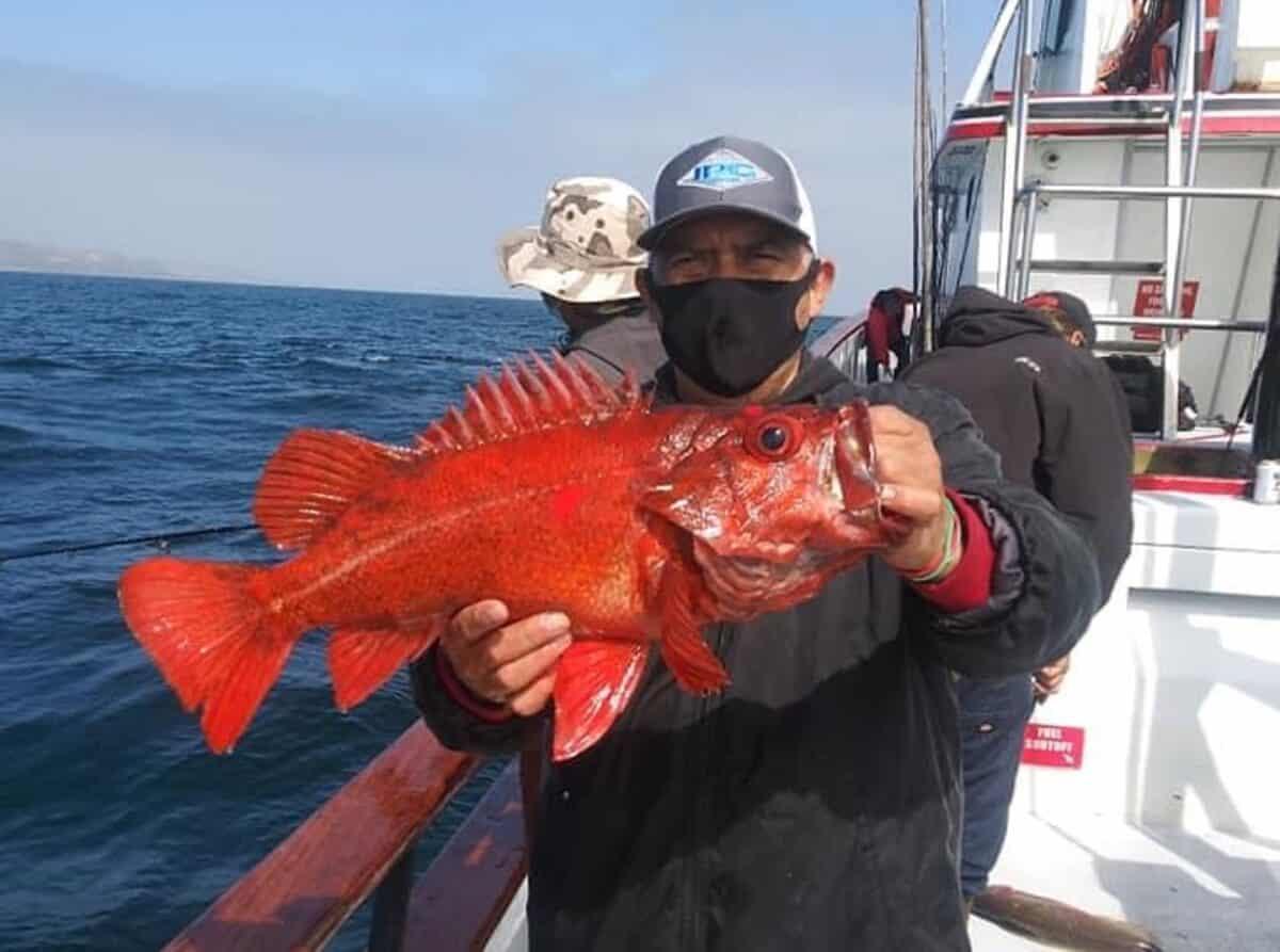 rockfish in SoCal