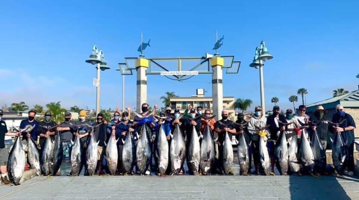 bluefin tuna counts