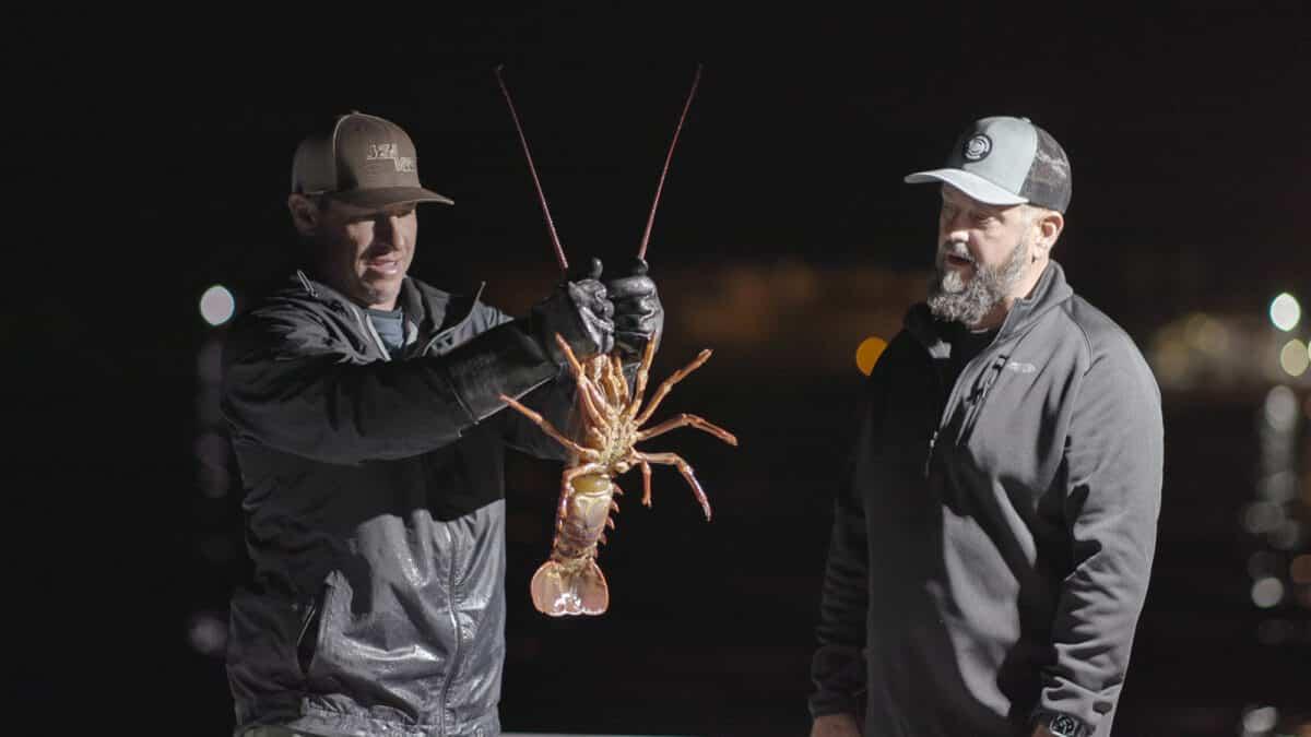 hoopnet lobster