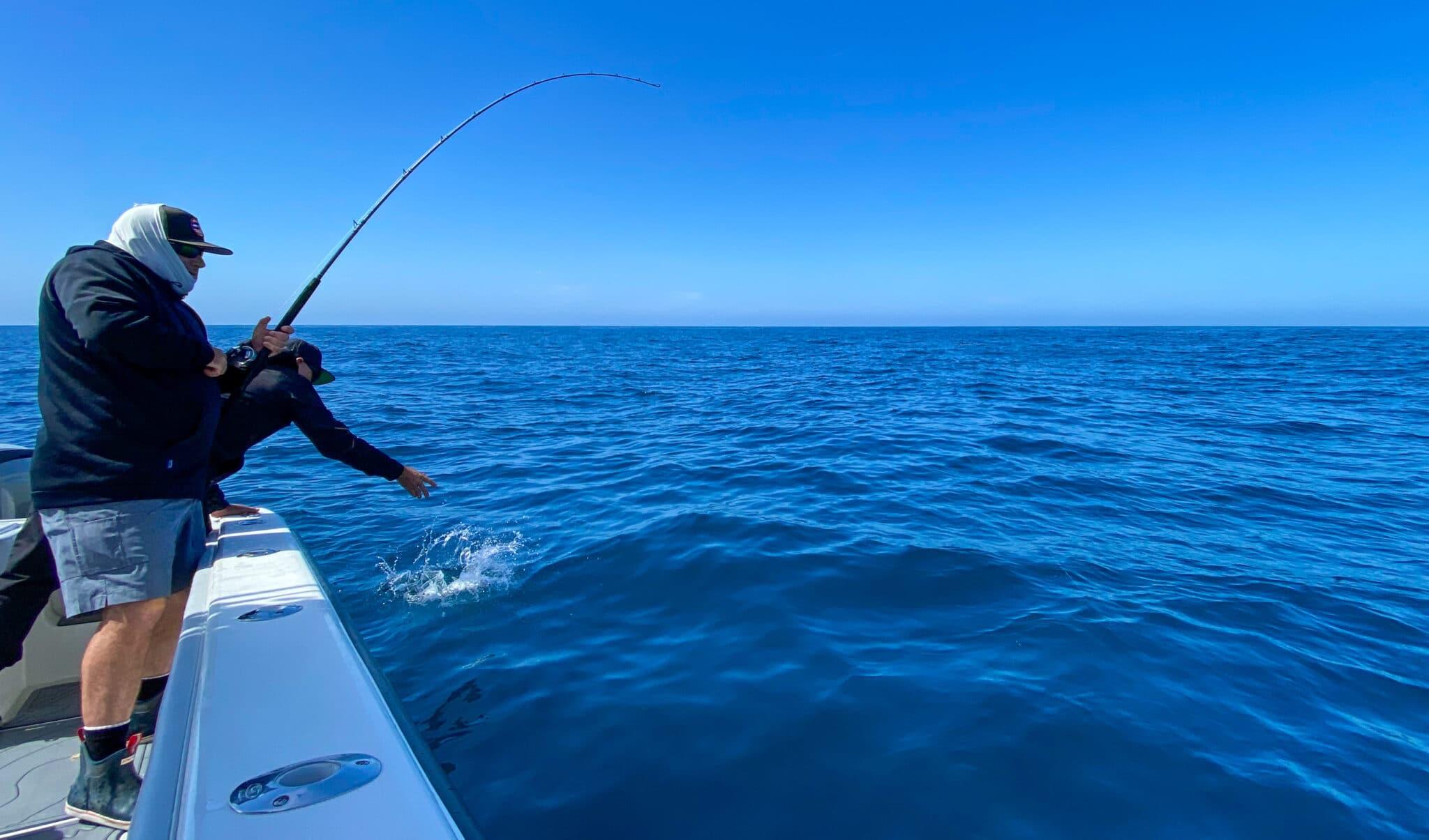 Kelp Paddy Yellowtail fishing