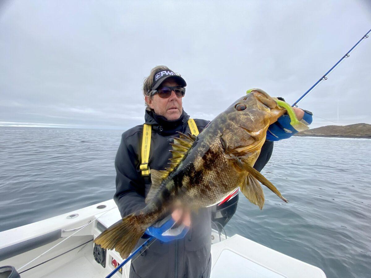 calico bass fishing
