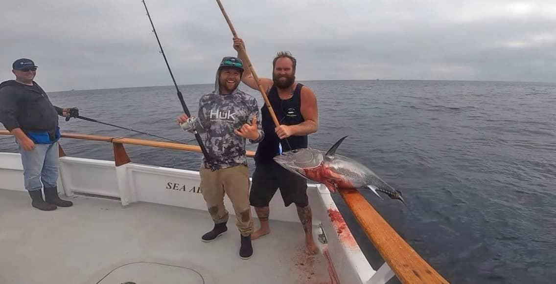 bluefin reports