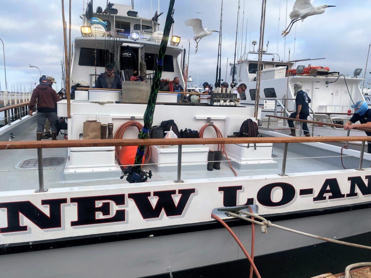 bluefin tuna report
