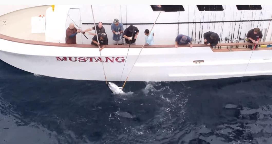 tuna fishing reports