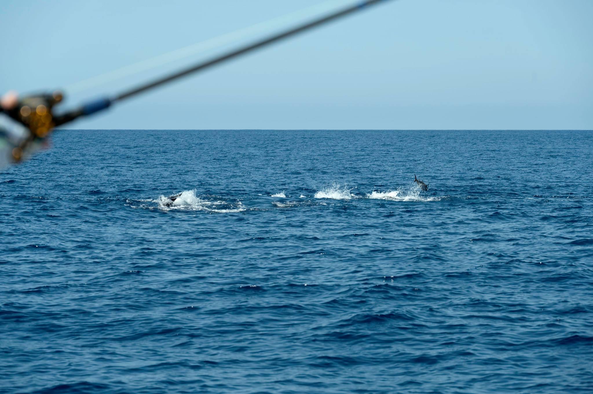 Tuna Boils