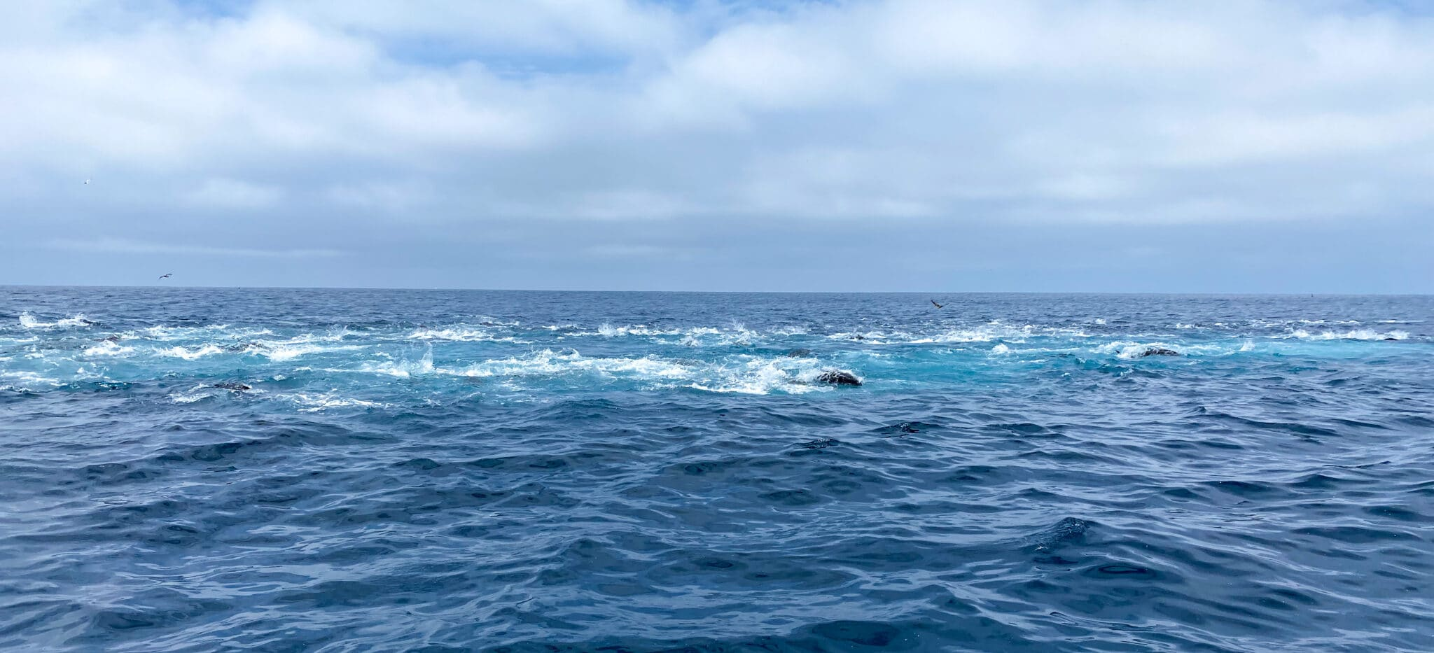 Bluefin Tuna Foamer